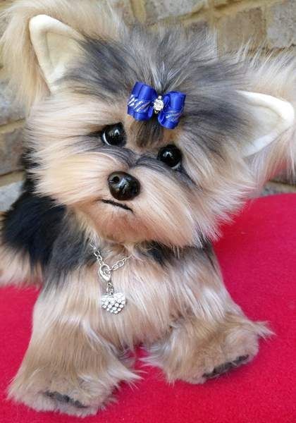 Ella A Life Size Yorkshire Terrier Puppy Dog By Brigitte Crowe