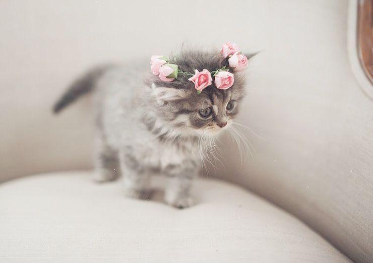Pin Cute Kitten Meow Sound Xoxo Cute Baby Animals Cute Animals Kittens Cutest