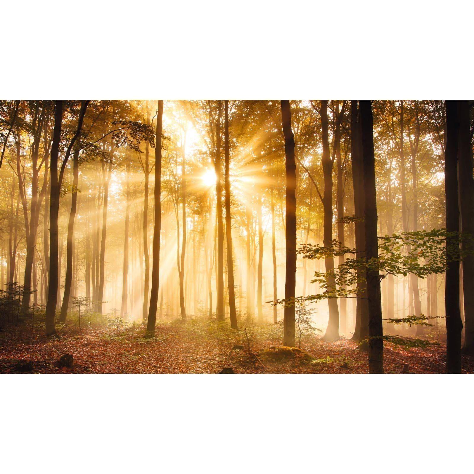 Leinwandbild ERLEUCHTETER WALD 78x135 cm (With images