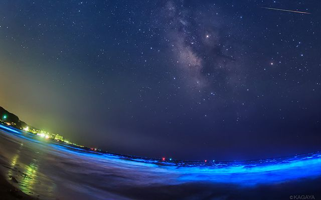 流星群の夜、鎌倉に現れた夜光虫 海と空、両方が光る光景を映像で – grape [グレイプ]