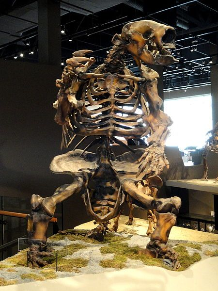 Megalonyx jeffersonii - Jefferson's Ground Sloth.  This thing weighed over 2,000 lbs!