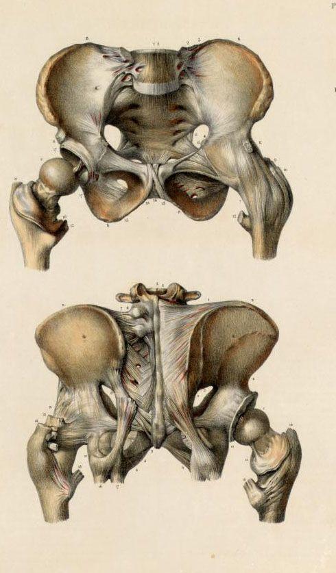 pelvis, greater trochanter | M素描速寫 | Pinterest | Greater ...