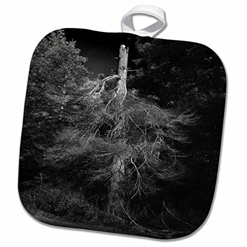 3dRose DYLAN SEIBOLD - PHOTOGRAPHY - TREES - BLACK AND WH...