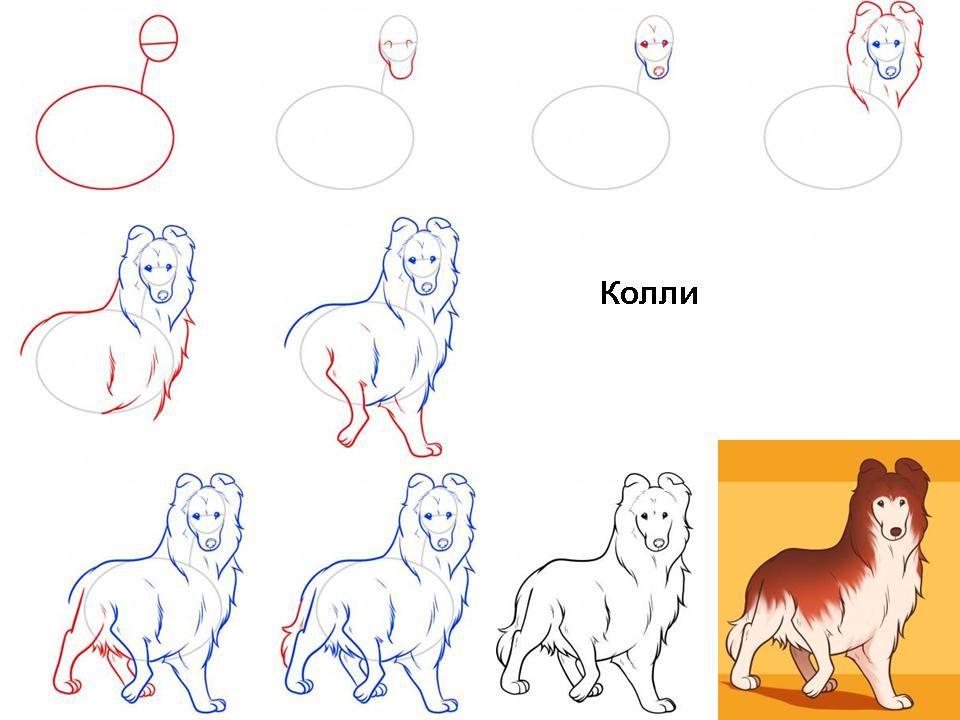 пошаговые рисунки породистых собак этой статье подробно