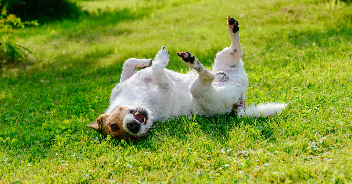 Allergies In Dogs I Common Signs That Your Dog Has Allergy