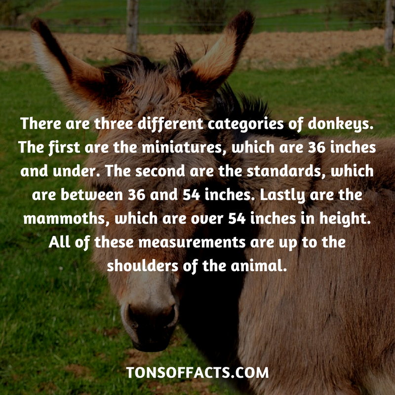 There are three different categories of donkeys. The first are the ...