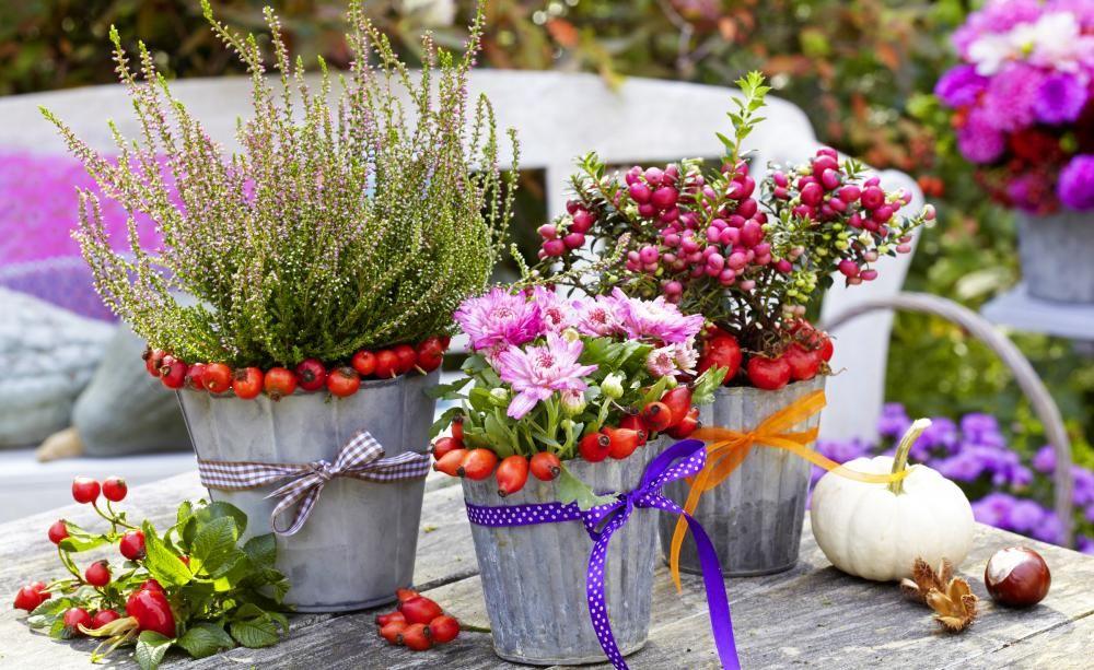 herbst: pflanzen und deko für balkon und terrasse | deko und, Garten und erstellen