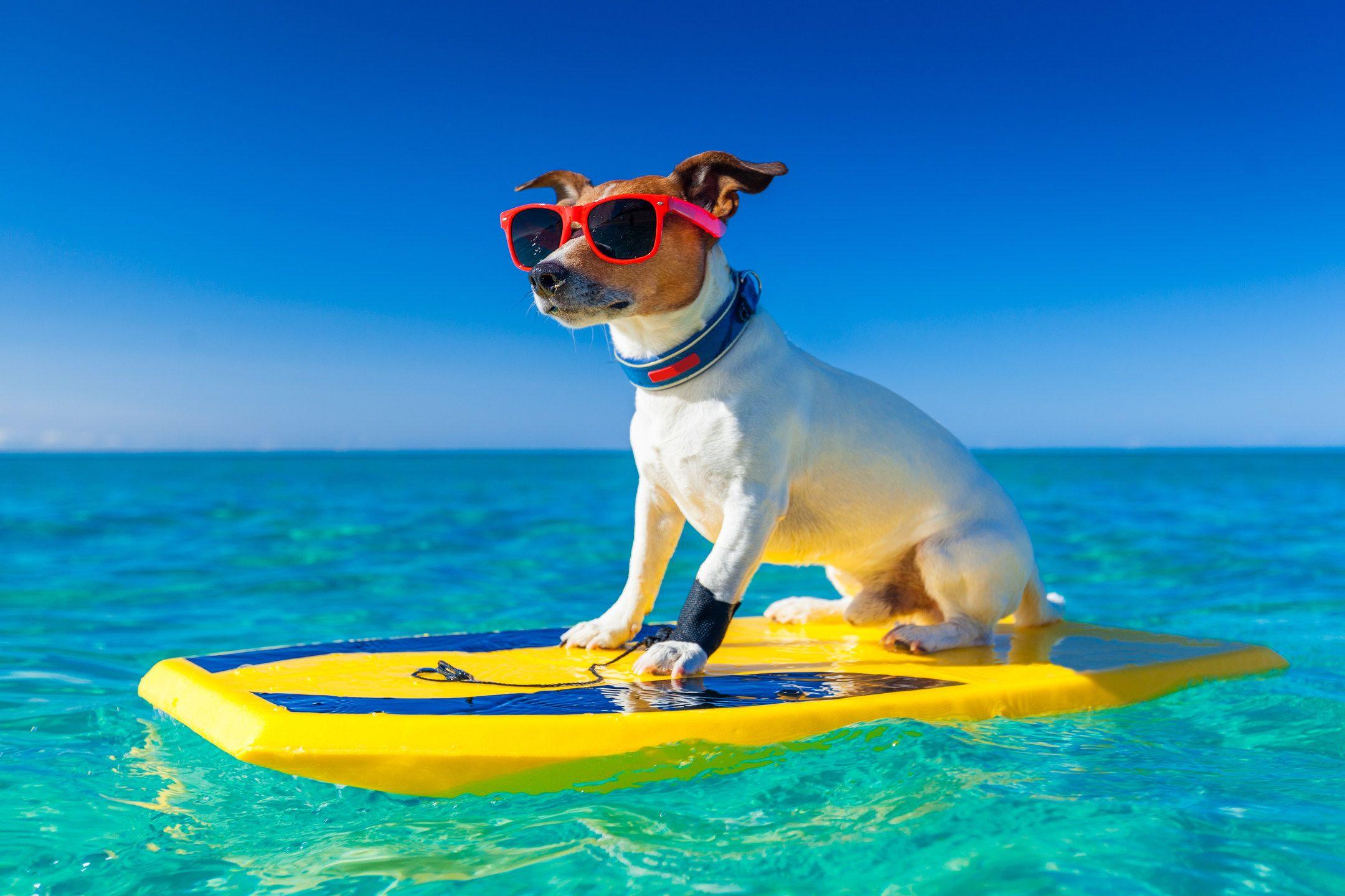 Surfing like a pro! Hawaiian dog names, Girl, dog, Dogs