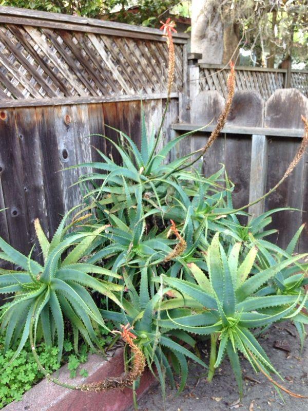 Free Plant Identification Growing succulents, Plants