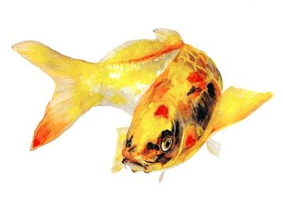 Yellow Koi Fish Watercolor Print Signed By Artist