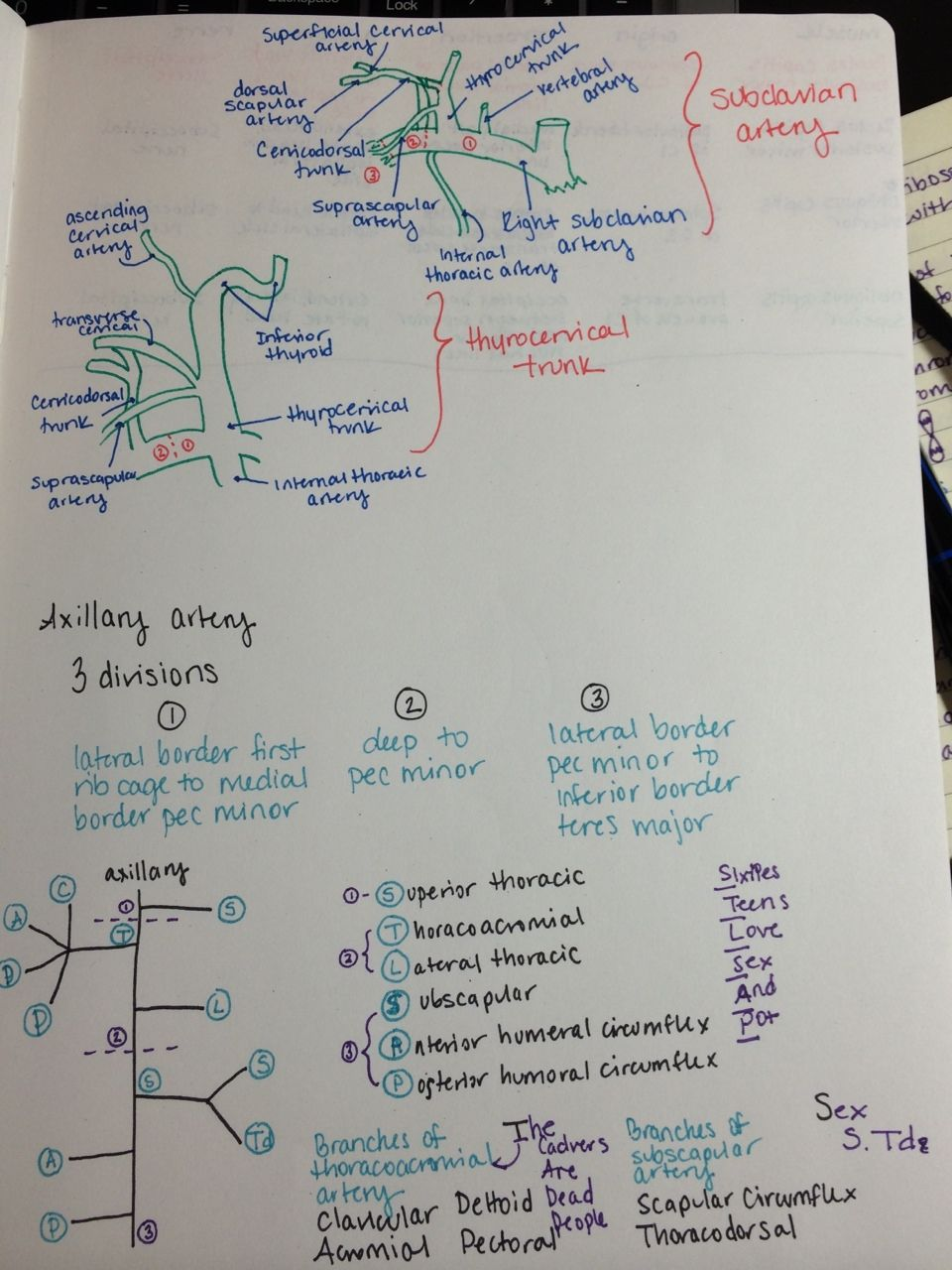 Above is my drawing of the subclavian artery branches and below is ...