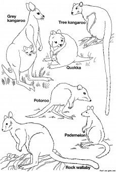 kangaroo animal coloring pages. Printable Australian Animals coloring pages  Coloring Pages For Kids
