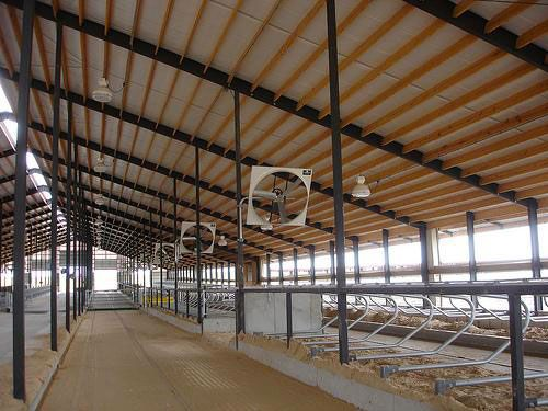 A Freestall Barn With Proper Ventilation And Fans For Air Movement