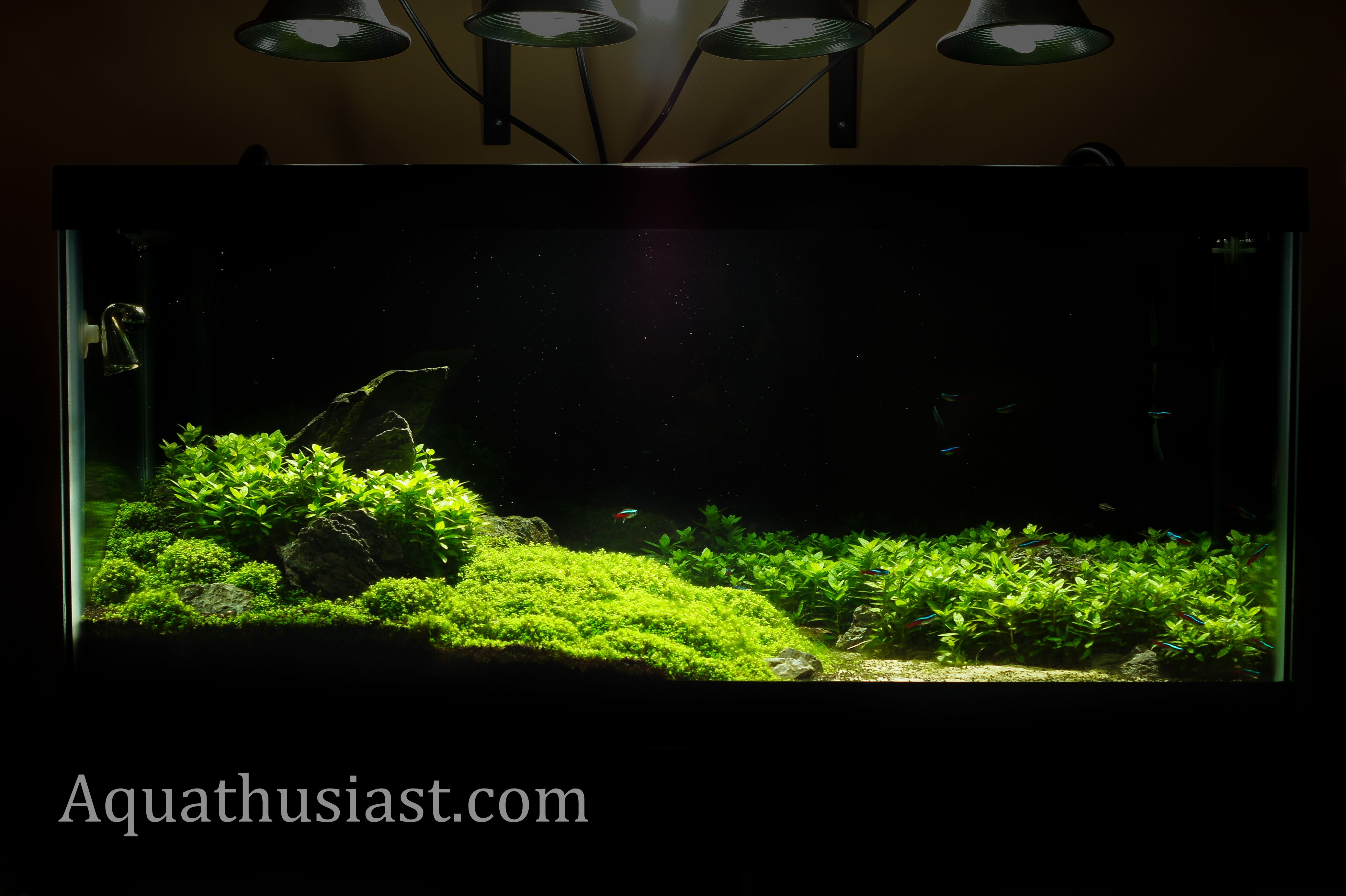 Freshwater aquarium fish species ebook -