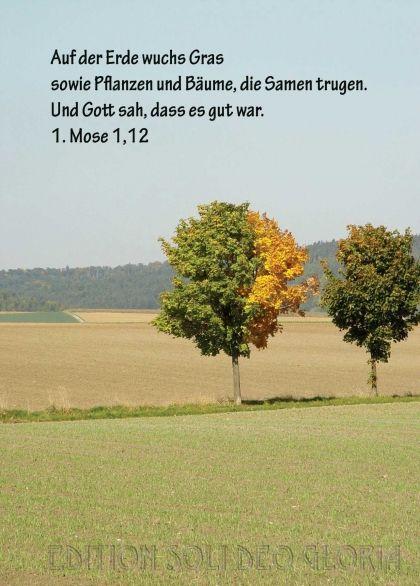 Mose Schopfung Baume Bibel A La Carte Christliche Karten