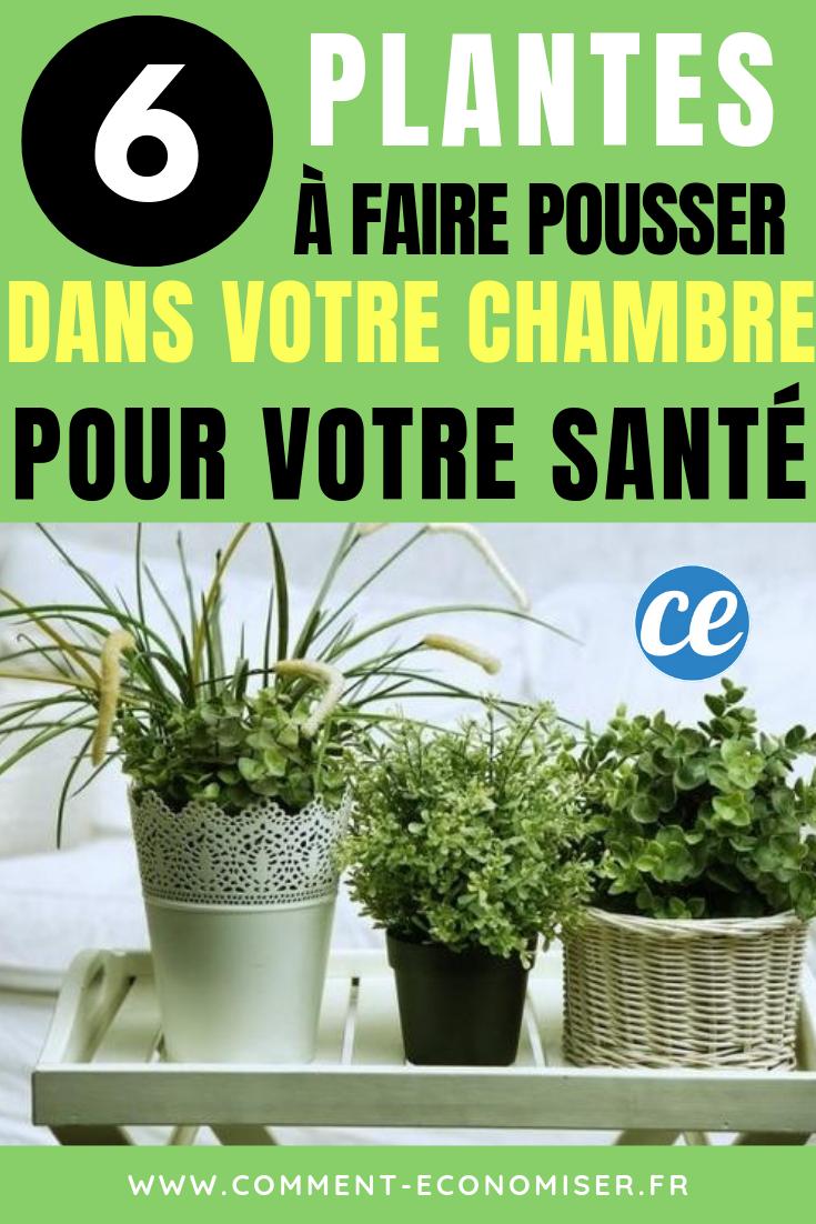 Plante D Intérieur A Faire Pousser 6 plantes à faire pousser dans votre chambre pour améliorer