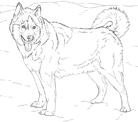 Alaskan Husky Coloring Page Free Printable Coloring Pages Dog Coloring Page Alaskan Husky Animal Coloring Pages