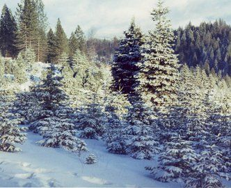 Christmas Trees Farms Across The County Will Be Opening Soon Photo From Snowy Peaks Christmas Tree Farm Christmas Tree Farm Tree Farms Farm