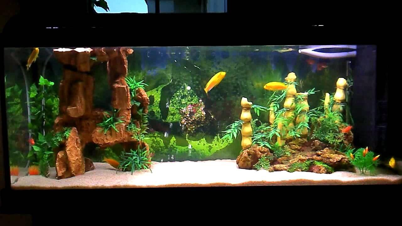 Aquarium fish tank for home - Beautiful Home Fish Tank Aquarium Displaying 18 Images For Most