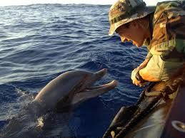 Pin By Susan Bozek On Animals Are From Heaven Service Animal Marine Mammals Endangered Species