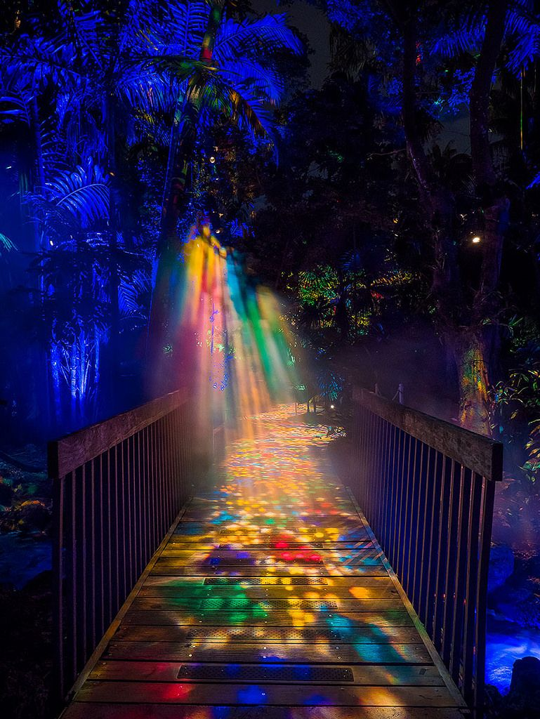 9ff2162d30bf6f44cab920d5c3ed424b - Savannah Botanical Gardens Christmas Lights 2018