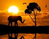 Colorful Scenery : Silhouette of elephant. Element of design.
