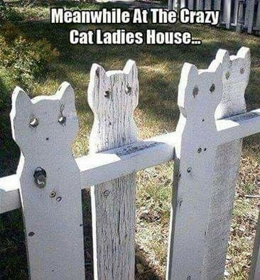 Kitty picket fence