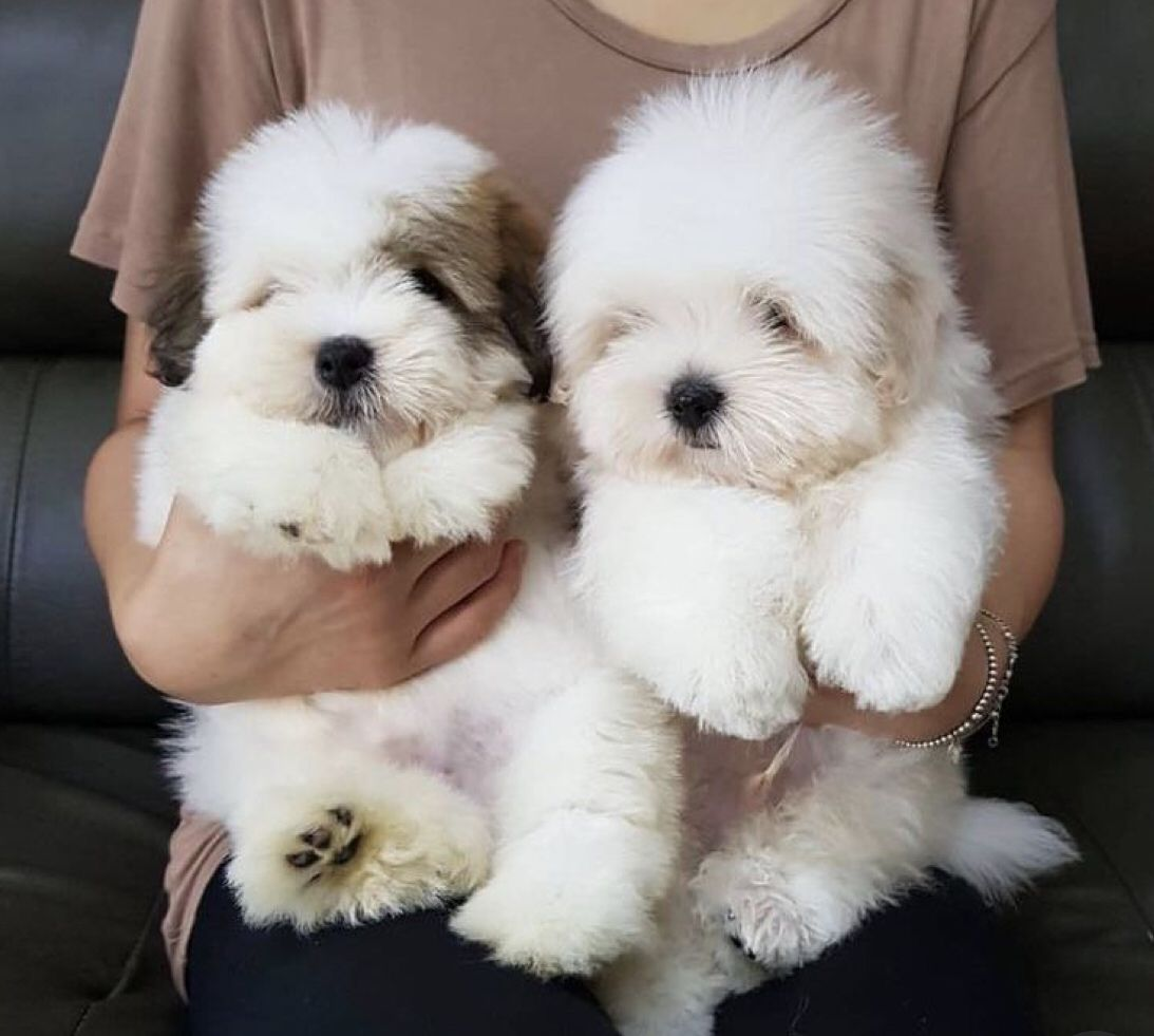 Omg I Just Want To Hold Pet And Play With Them They Seem