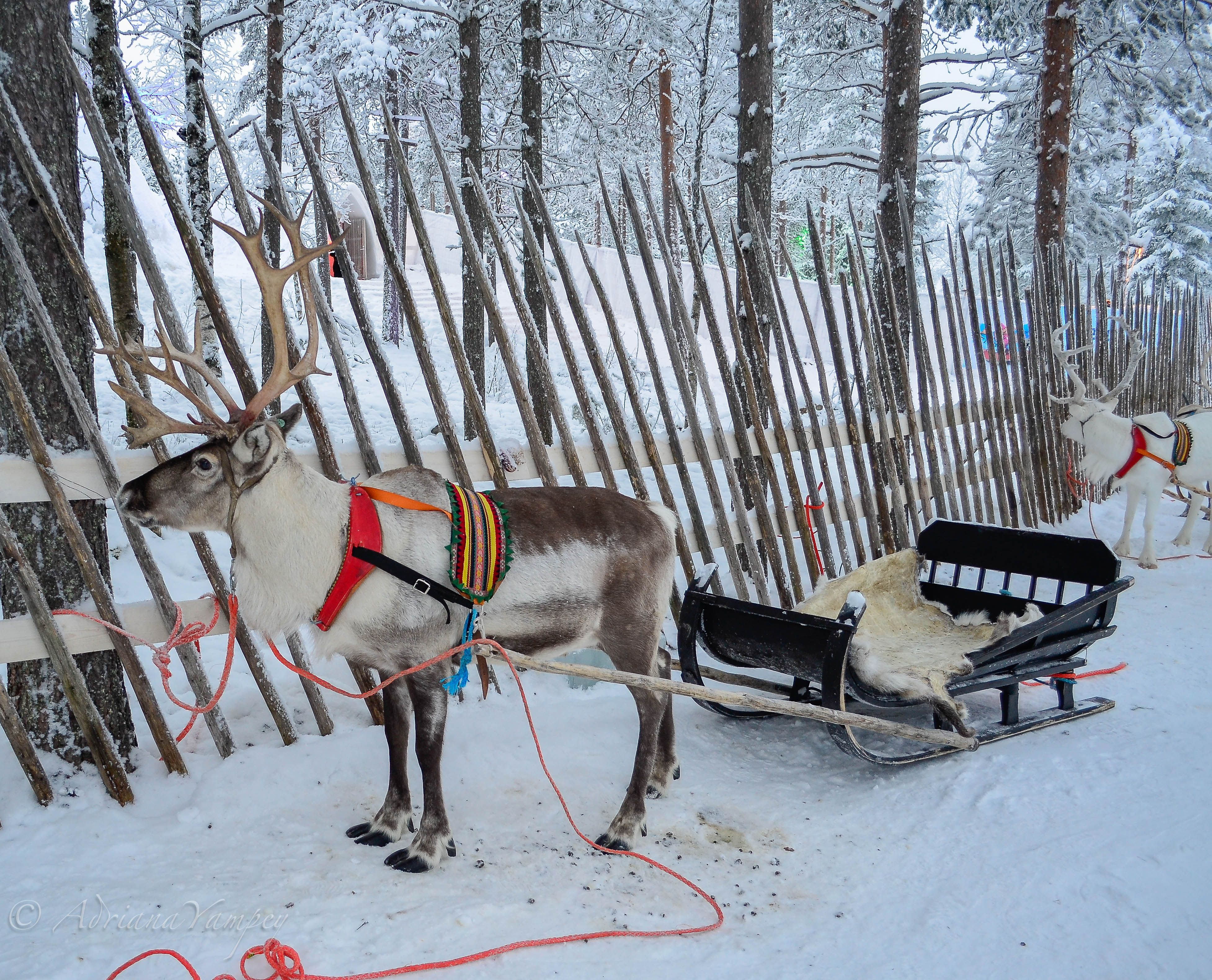 Image result for Reindeer Sleigh