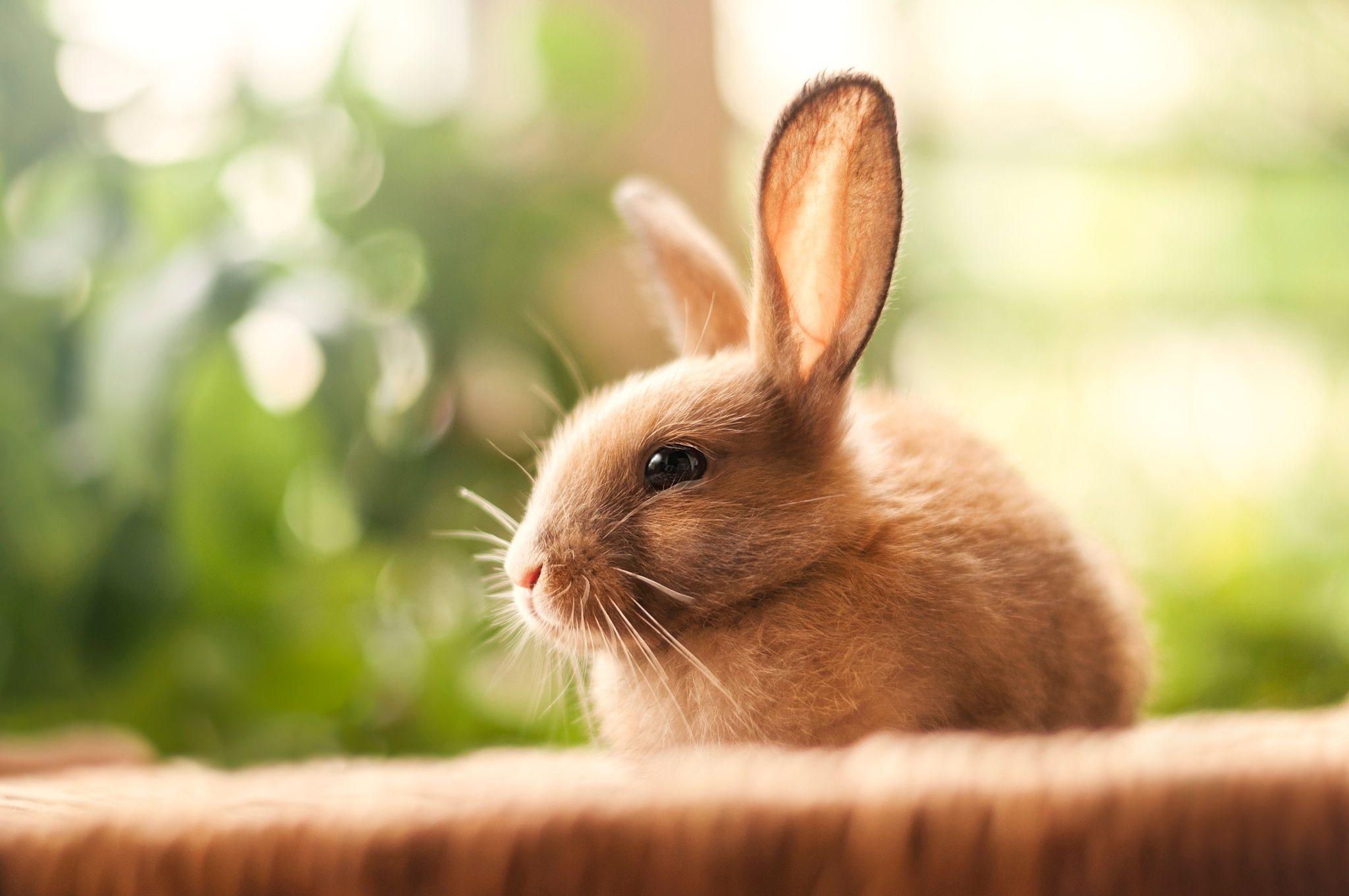 Картинки красивые зайчики