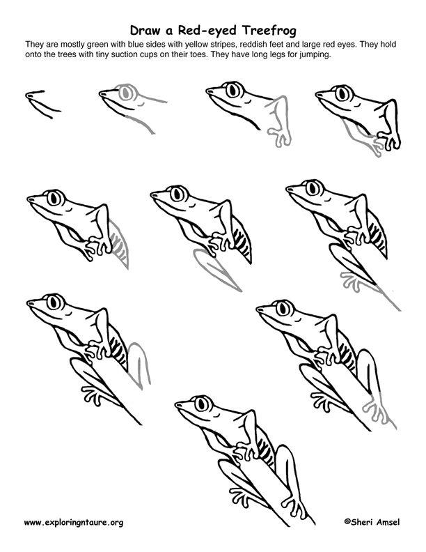 amazon rainforest trees drawing. redeye treefrog draw an amazon rainforest trees drawing i