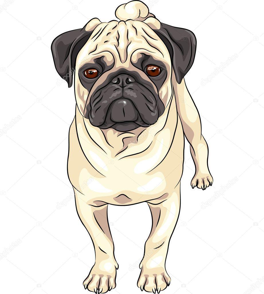 Related Image Dog Illustration Pug Breed Pug Art