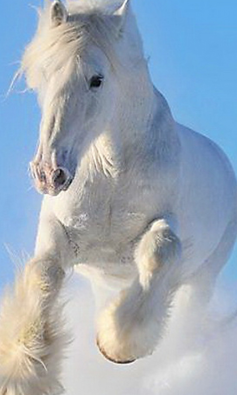 Download free horse wallpapers for your mobile phone most