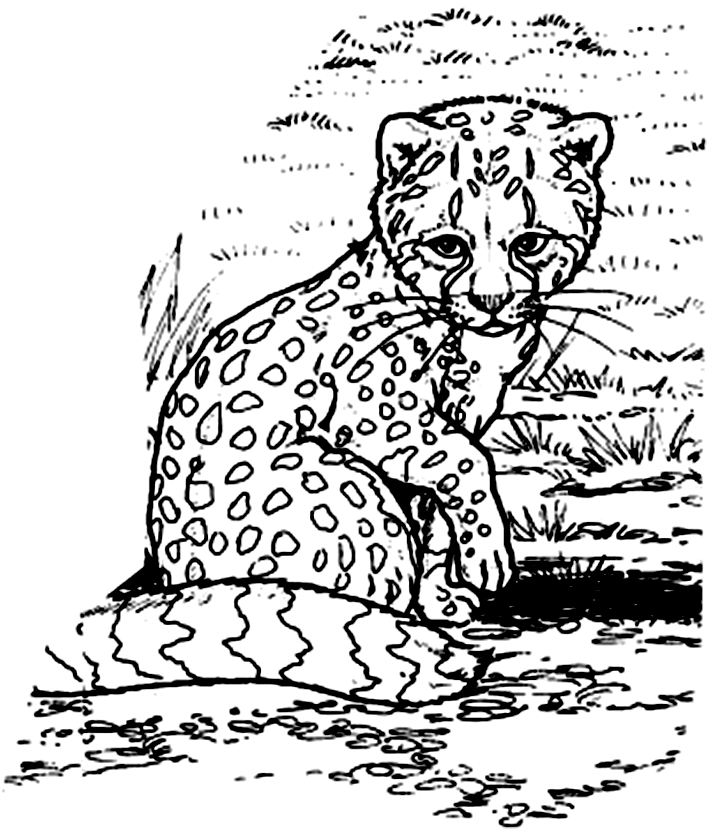 Cheetah Cub Coloring Pages | Coloring | Coloring Pages for kids ...