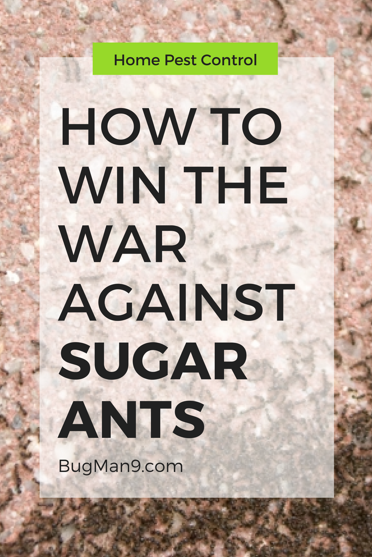 Why are sugar ants so hard to get rid of?! Here are some tips from pest control professionals on how to finally get rid of pest ants in your house.