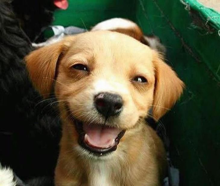 These Adorable Pups Can T Help But Smile For The Camera Happy