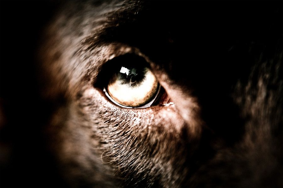 An Eye. by Olli Toivonen, via 500px