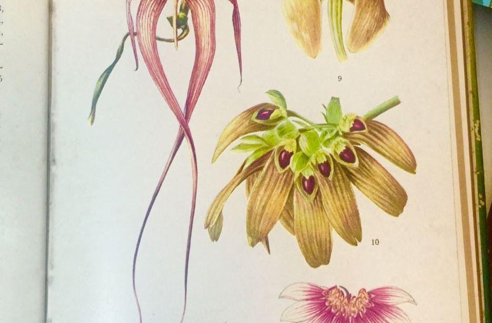 Contoh Gambar Ilustrasi Bunga Yang Mudah Digambar