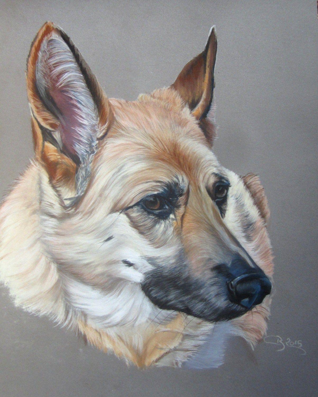 Portrait de berger allemand aux pastels dessins de - Dessin de chien berger allemand ...