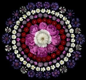 Beautiful mandala created by Portia Munson with flowers.  Some of her work is on display at some NYC subway stations. http://www.portiamunson.com/