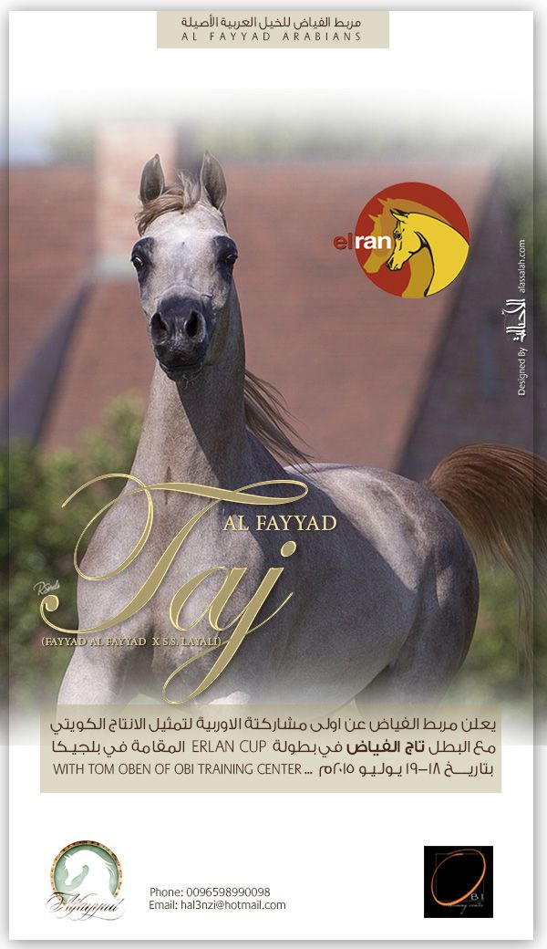 Pin On Arabian Horses News