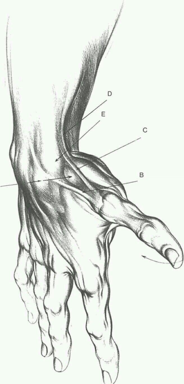 Pin de Galaxy Orourke en Art | Pinterest | Anatomía, Cuerpo humano y ...