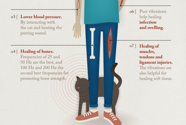 The Healing Power of the Cat Purr Cat purr, Purring, Cats