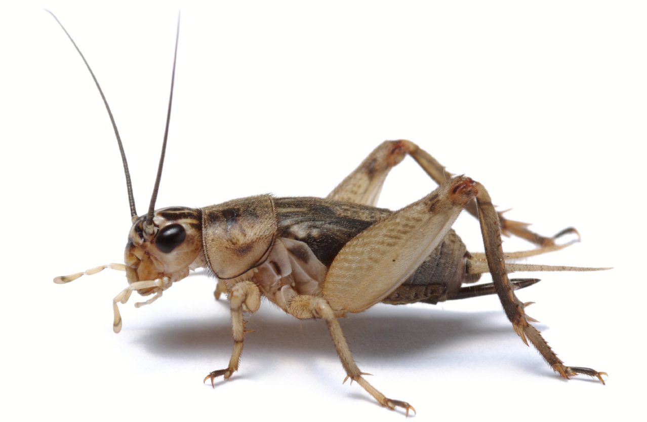 Gerelateerde afbeelding Insecten, Dieren