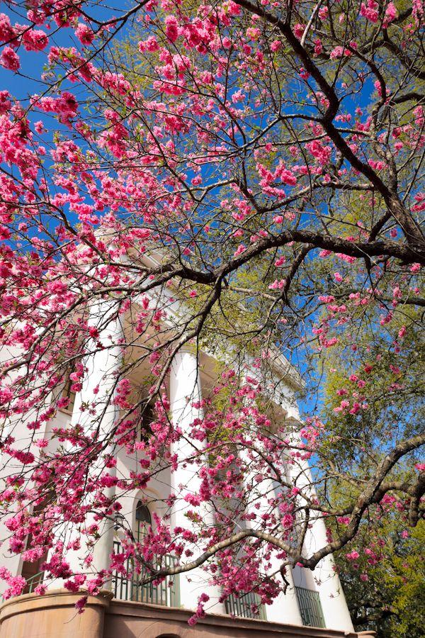 hueandeyephotography:  Washington Square Park, Charleston, SC © Doug Hickok All Rights Reserved More here… hue and eye