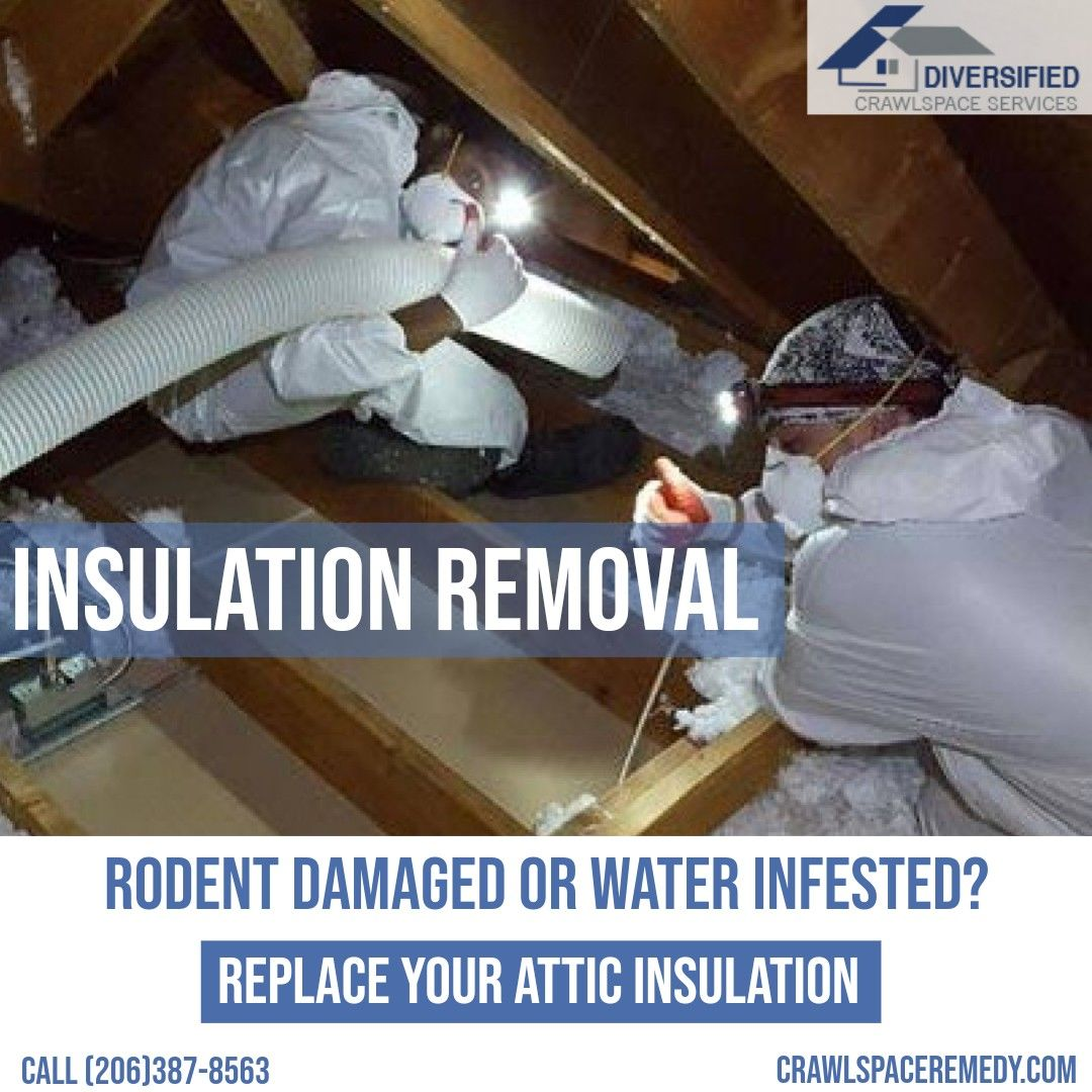 Insulation Removal Rodent Damaged Or Water Infested Replace Your Attic Insulation In 2020 Attic Insulation Insulation Removal How To Remove