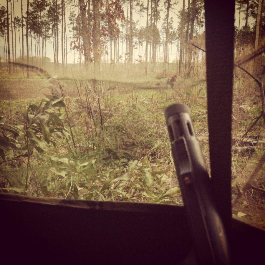 how to turkey hunt for beginners