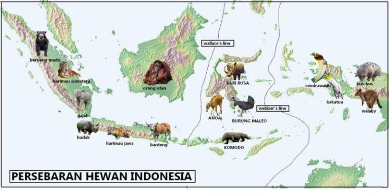 Hewan Langka Di Indonesia Carak Us Gambar Flora Dan Fauna Hewan Flora