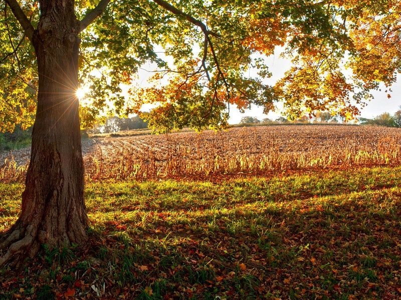 Autumn Country HD Wallpaper on MobDecor Wallpaper, Hd