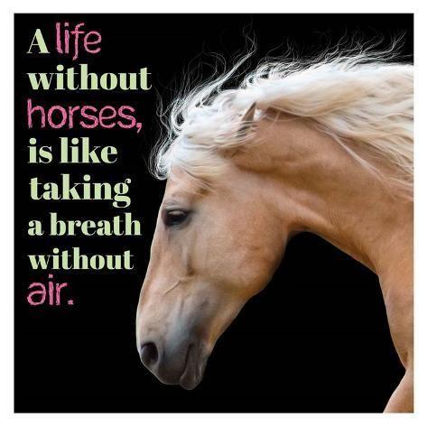 'Horse Quote 7' Art Print - Sports Mania | Art.com